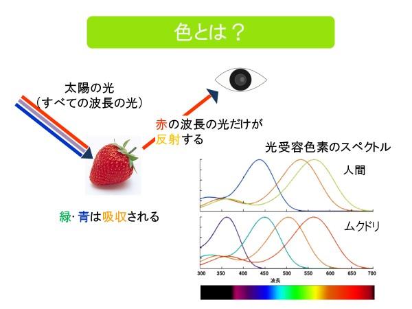 色の仕組み スペクトル