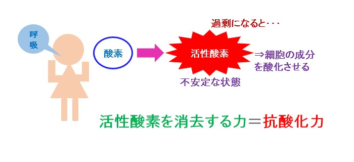 活性酸素 抗酸化力