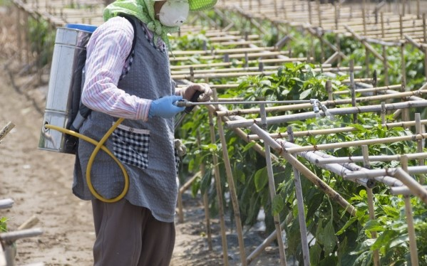マスクをして野菜に農薬を散布する農業従事者