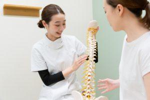 骨模型 健康