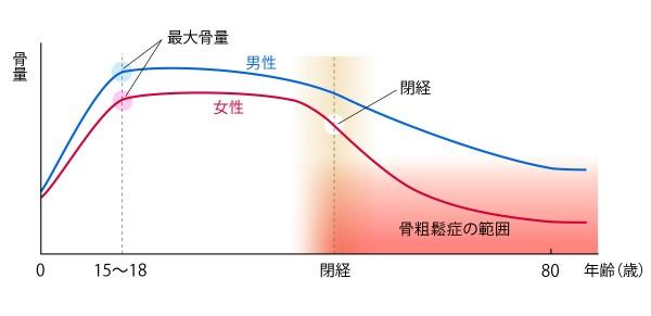 骨量の変化 グラフ 骨粗鬆症財団