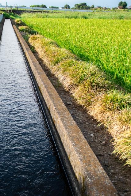 田んぼに水を引き入れる用水路。