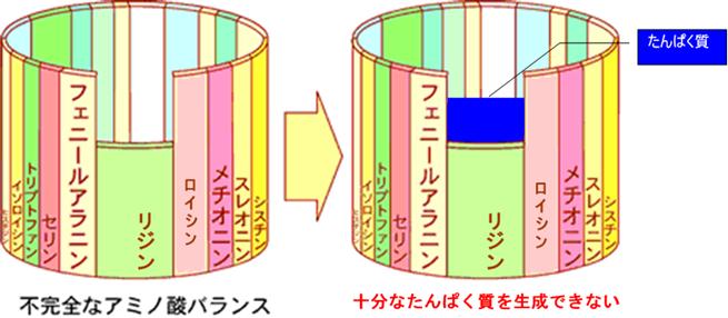 アミノ酸バランスの図。必須たんぱく質のどれかが欠けると十分なたんぱく質が合成されない。